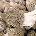 Wild morel mushrooms