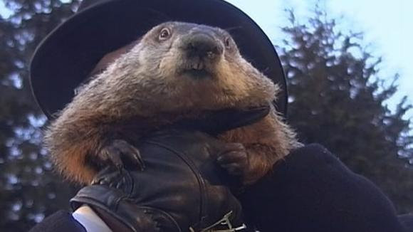 Punxsutawney Phil has been 'charged' for his faulty Spring forecast.