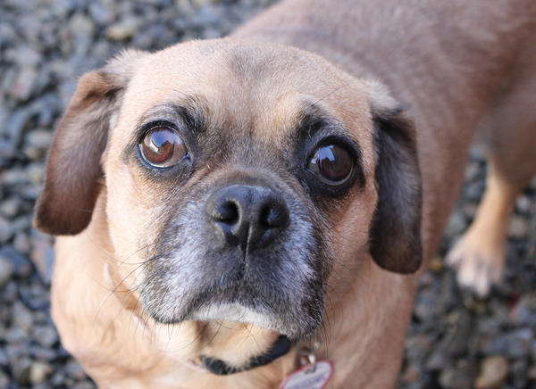 Bella is looking for a home.