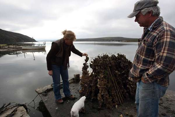 Kevin Lunny, owner of Drakes Bay Oyster Co., right, looks down from a barge as his sister Ginny Cummings looks over oyster sticks that have been harvested at the oyster farm in the Point Reyes National Seashore in December 2009.