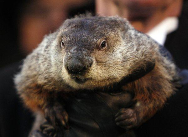 With another snowstorm hitting the Midwest this weekend, an Ohio prosecutor is demanding the death penalty for Punxsutawney Phil, the groundhog who predicted an early spring this year.