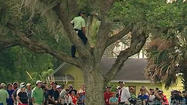 Sergio Garcia climbs tree to hit one-handed shot