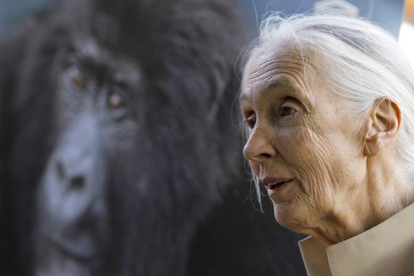 Primatologist and author Jane Goodall at a January lecture in Nairobi, Kenya. Her upcoming book has been postponed.