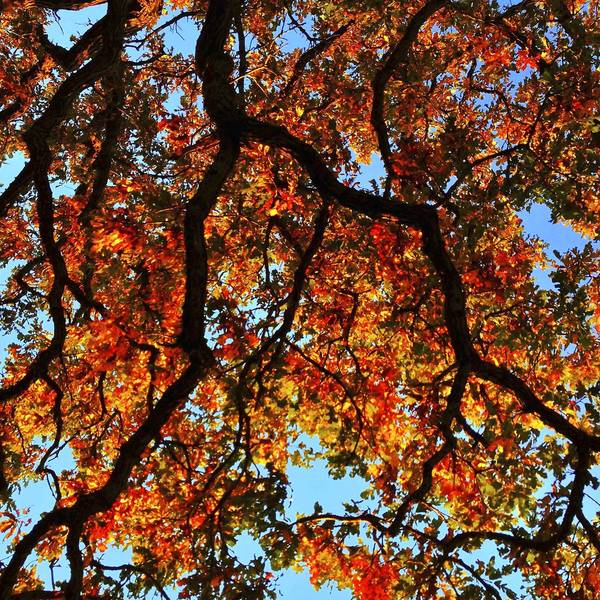 """Day 194, October 3, 2012. Photographs from the iPhone photo a day project """"That Tree"""" by Mark Hirsch."""