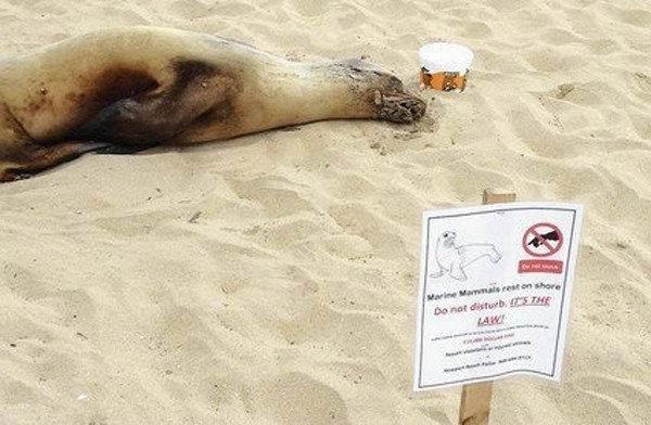 The city posted warning signs and residents left water for a sea lion that had made it to the boardwalk in Newport Beach.