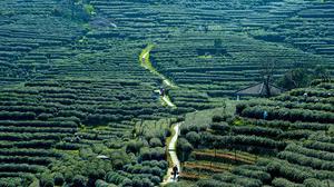 China: Sips of Hangzhou are savored like a fine tea