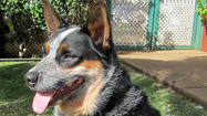 Hawaii: Missing your pets? Volunteer at Maui's  humane society