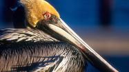 A bird's-eye view of Cedar Key