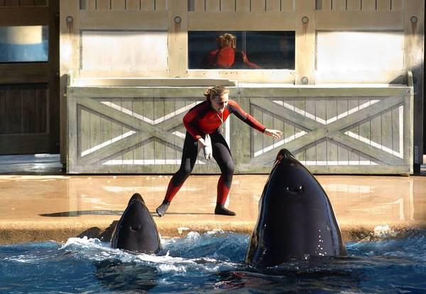 Dawn Brancheau shown performing with SeaWorld Orlando's killer whales on Dec. 30, 2005. She was killed in an accident with a killer whale on Feb. 24, 2010.