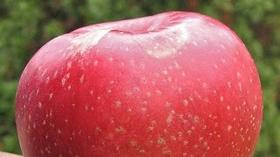 Fruits: Grow and harvest your own in a small backyard orchard