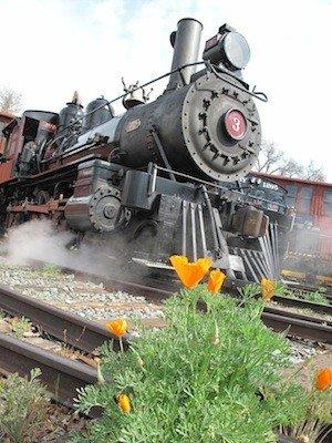 Railtown 1897 State Historic Park in Jamestown, Calif., offers a wildflower tour on two Saturdays in April.