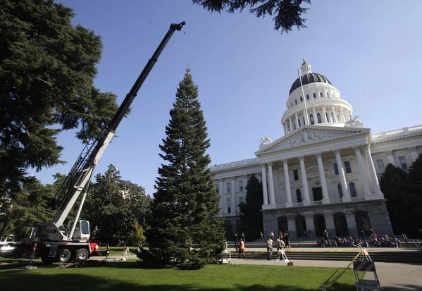 A crane places the state Christmas Tree in front of the Capitol in Sacramento.