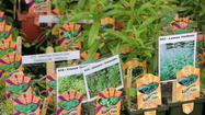 Go green at home with native plants!