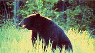 In case you hadn't heard, a legislative committee recently got behind a bill that would set up a lottery system for people to hunt and kill bears in Connecticut.
