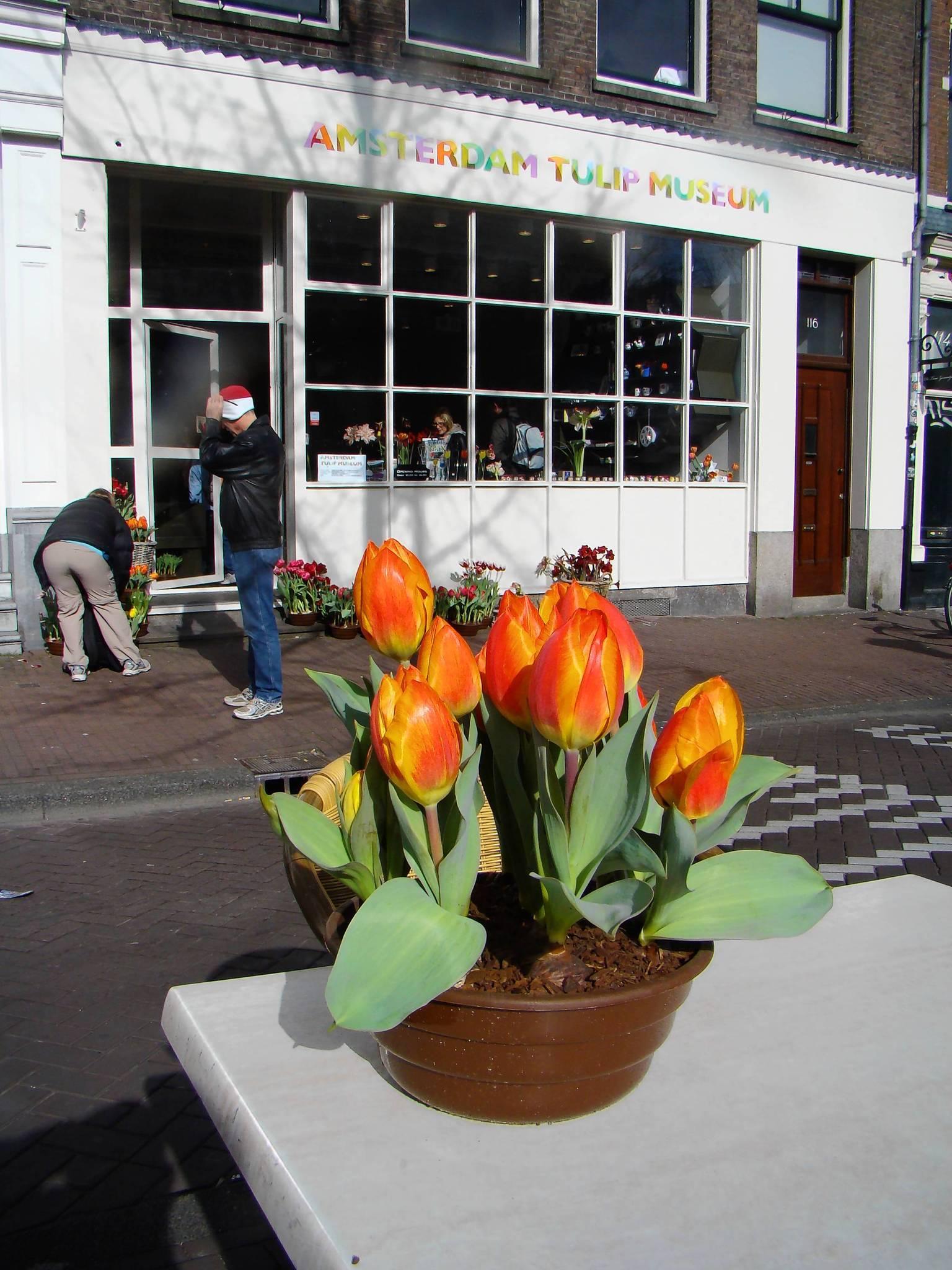 Museum puts Amsterdam in eternal bloom