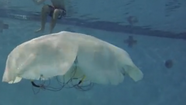 Researchers at Virginia Tech College of Engineering have unveiled a life-like, autonomous robotic jellyfish the size and weight of a grown man as part of a U.S. Navy-funded project.