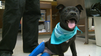 Bethel Puppy Recovering After Abusive Past