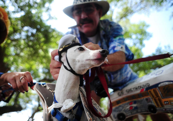 Dr. Michael Freimar of Plantation and his Italian greyhound named Phantom attend an event hosted by Hollydogs in 2010. The rescue group is holding an adoption party on Sunday at John Williams Park in Hollywood.
