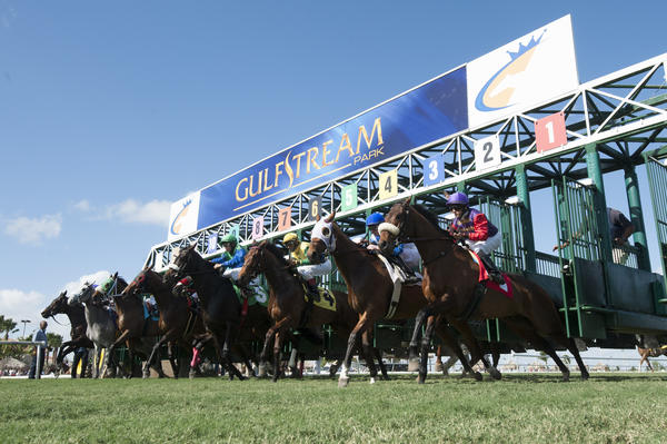 Gulfstream Park closes Friday and plans to re-open July 1, going head-to-head with Calder. Gulfstream Park photo