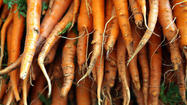 Loose soil best for root vegetables