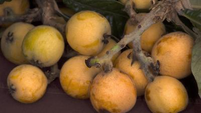 Farmers markets: Be aware of the rhythm of the season