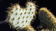 Overcoming obstacles: Or, what I learned from a cactus
