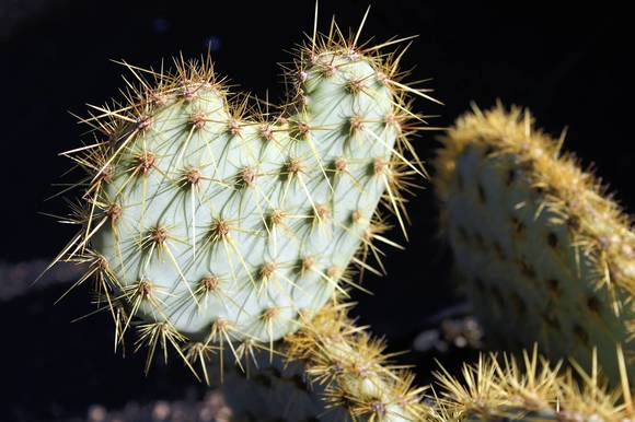 Watch out for the prickly parts of work ... and life