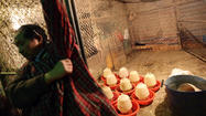 China bird flu virus found in more markets in Shanghai