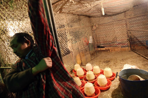 A Chinese vendor shows the empty poultry cage at the Huhuai wholesale agricultural market in Shanghai, a day after a total of 20,536 chickens, ducks, geese and pigeons had been slaughtered. Shanghai ordered all live poultry markets in the city closed after culling more than 20,000 birds to curb the spread of the H7N9 flu virus.