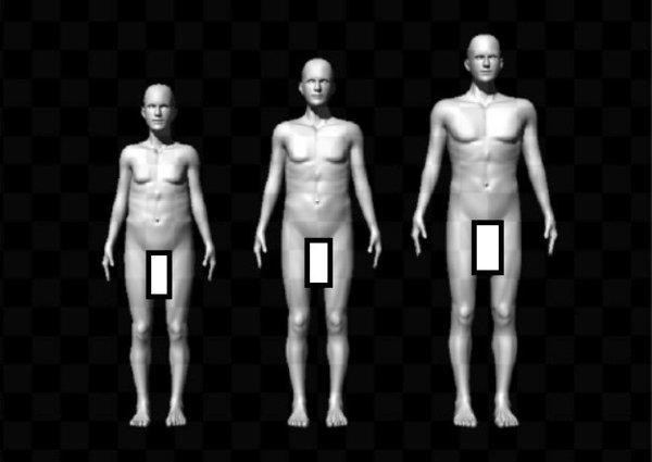 An Australian study argues that female selection has driven the evolution of relatively large penis size in humans. (Boxes added.)