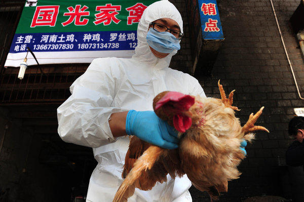 A technician from the Changsha Animal Disease Prevention and Control Center samples and tests birds Sunday in a market in Changsha, in central China's Hunan province. The World Health Organization said Monday that there is no evidence China's bird flu is spreading between humans, but Chinese remain jittery over the outbreak that has killed seven people.