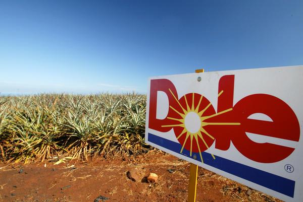 A field at the Dole Helemano Pineapple Plantation near Wahiawa, Hawaii.