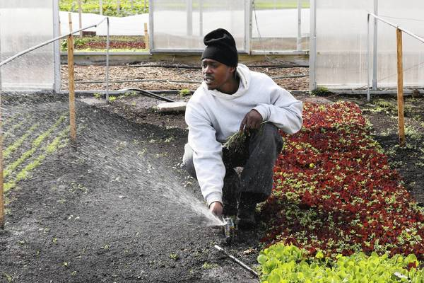 Fred Daniels works at a Growing Home urban farm project in West Englewood. Growing Home is seeking $20,000 in pledges through Seed Chicago on the crowdfunding website Kickstarter to build a greenhouse on the city's South Side.