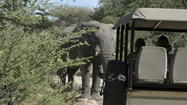 MAUN, Botswana - If you've paid for an African safari but you're still not clear about the details, bad on you. Making the same mistake, I didn't dig into the heart of the adventure before I headed to Southern Africa for my first wildlife safari, because I was always too busy. Bad on me!
