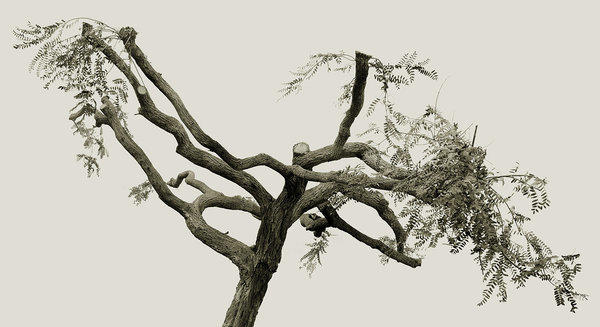 "Amir Zaki, ""Tree Portrait 27,"" 2012, framed ultrachrome archival pigment photograph with UV coating."