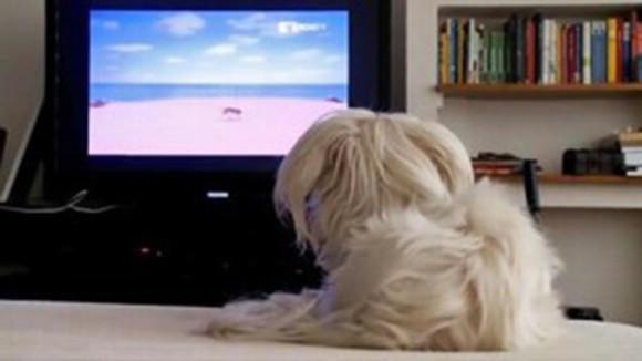 DirecTV will start airing DogTV, a channel directed at an audience of the four-legged variety, for $5.99 a month.