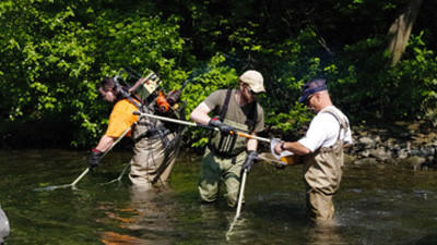 A combined Pa. Fish and Boat Commission and Somerset Conservation District survey crew electrofish the 1.3 miles of Quemahoning Creek downstream from the Quemahoning Reservoir.