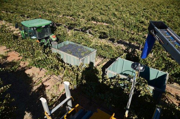 Researchers say wine grape growing might relocate to new regions because of climate change.