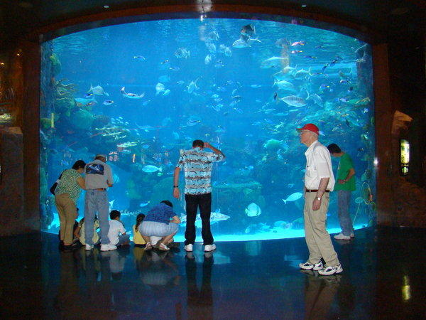 The giant aquarium at the Silverton Hotel Casino in Las Vegas will be the venue for an underwater wedding on April 18.