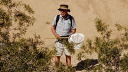 Algodones Dunes insect survey turns up variety of life