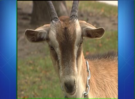 Mayor: Goat's head at Wrigley 'speaks for itself'