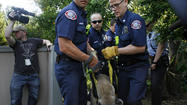 Photo Gallery: Mountain lion captured in La Crescenta