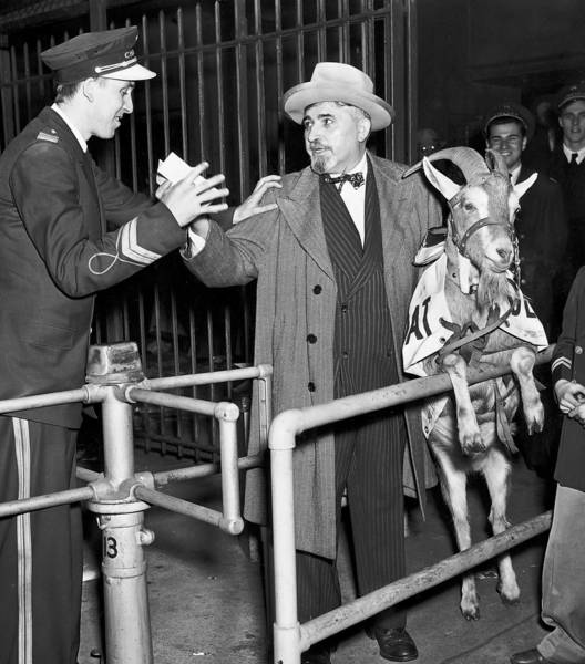 Billy Sianis, owner of the Billy Goat Tavern, was said to have placed a curse on the Cubs in 1945 after he was barred from entering a World Series game at Wrigley Field with his pet goat, for whom he had bought a ticket. The Cubs have not been back to a World Series since.