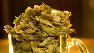 Much more than just a bittering agent, hops are the soul of beer. They balance the sweetness of the malt and furnish a refreshing flavor and pungent aroma to beer, and American craft brewers are experts at showcasing this spectrum of flavors that hops lend to beer.