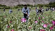 Afghanistan opium poppy production increasing, U.N. says