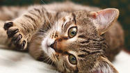 <strong>Q: What are the symptoms of feline leukemia? How can I protect my cat against it if I have to board her with other cats?</strong>