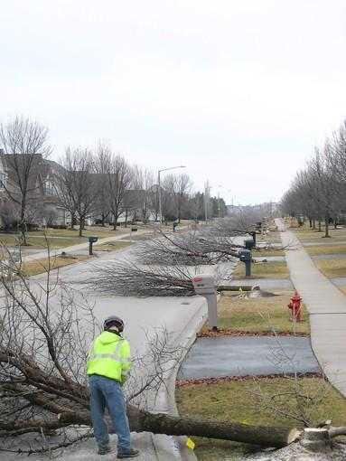 The Plainfield Board of Trustees voted to fund replacement of ash trees decimated by the emerald ash borer, a beetle that required these trees in the Champion Creek subdivision to be removed last year.
