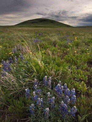 Zumwalt Prairie Preserve in northeast Oregon received designation as a national natural landmark on Tuesday.