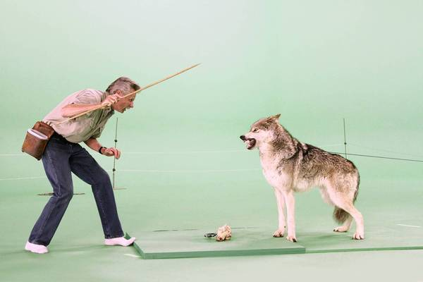 Animal trainer Steve Martin works with a gray wolf for a shot on a green screen at Hollywood Center Studios.