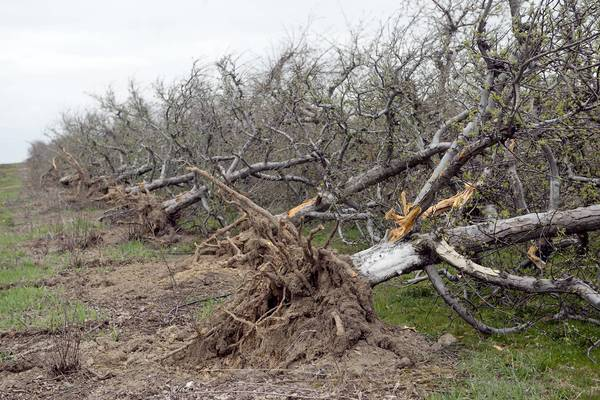 Bulldozed apple trees in South Whitehall Township may be the victims of welfare for the rich in the form of farm subsidies that favor Southern states.